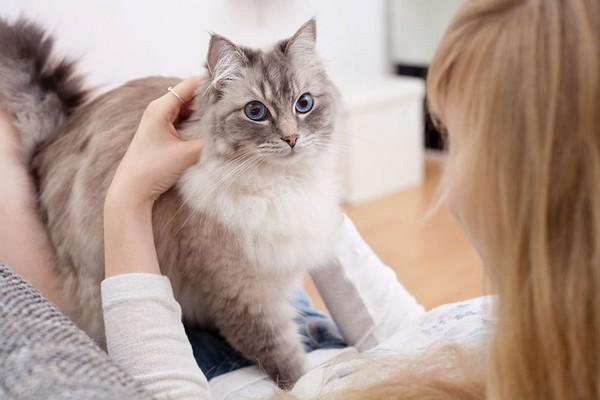 Какие лакомства любят коты?